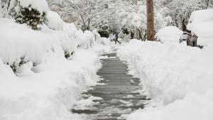 Freshly shoveled sidewalk, with snow piled up on both sides