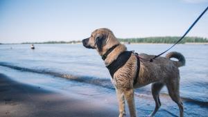 Toxic Algae Harmful to Pets Detected in Willamette River