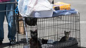 After days of record-breaking heat in Multnomah County and across the Pacific Northwest, pets may endure even more stress with explosions, flashing lights and the unpredictability of fireworks.