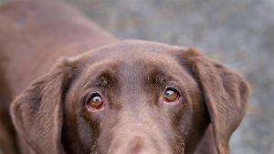Animal Services Dog