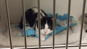 A cat at Animal Services