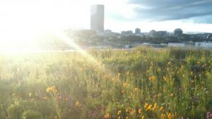 View of Portland from Multnomah Building Eco-Roof