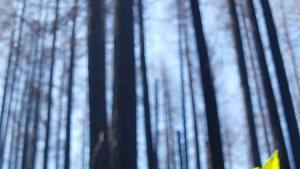 Fern grows after Eagle Creek Fire