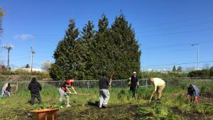 Youth working in a community garden on a sunny day