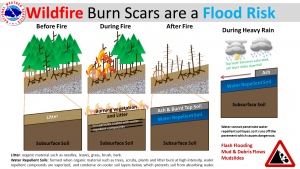 Drawing of a forest before a fire and then after.  Side image showing that flooding is possible when it rains after a forest fire