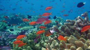 A Coral Reef, by David Burdick (CC BY-NC-ND 2.0)
