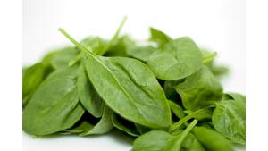 Small pile of raw spinach leaves
