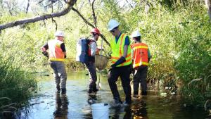Workers in brightly colored safety vests standing in a stream, stunning fish and collecting them with nets and buckets.