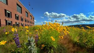 Picture of the Multnomah Building Green Roof