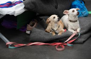 Dogs enjoy a break from smoke at a Red Cross shelter at the OCC in September, 2020