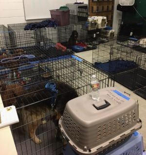 Dogs in crates at a Disaster Resource Center
