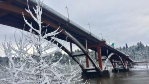A view of the snow-covered Sellwood Bridge from below, with a snow-covered tree in the foreground.