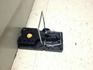 heavy-duty rodent trap